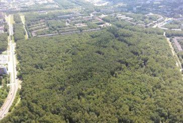 Гурьяновский лес в Обнинске благоустроят к октябрю
