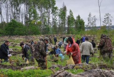 В Калужской области план лесовосстановительных работ перевыполнен почти на 20%