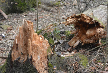 Балабановский лес нужно спасать